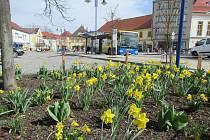 Pěkné počasí láká ven občany Jindřichova Hradce a vyhání i první kvítky.