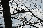 Velikonoce v Zoo Na Hrádečku.