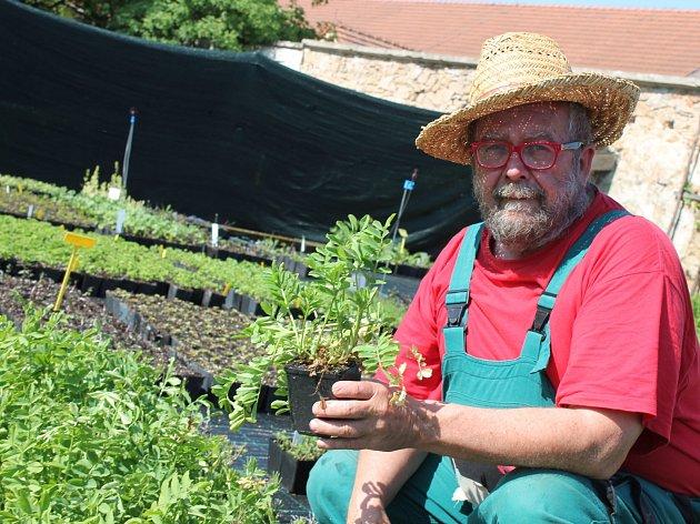 Zahradník Martin Charvát z Jindřichova Hradce radí, jak si poradit s pěstováním bylinek doma v kuchyni.