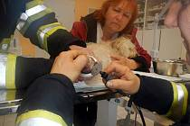 Psovi se ve sprše zaklínila voda v odtoku, třeboňští hasiči ho vyprostili a odvezli na veterinární kliniku. Zde mu ve spolupráci s veterinářem odtokovou mřížku z nohy sundali.
