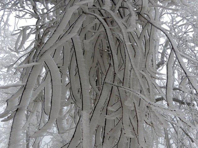 Pohled na namrzlé větve u Starého Města pod Landštejnem.
