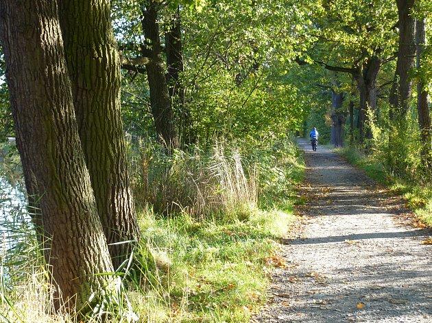 V lokalitě Hradeček v Třeboni vede Stezka zdraví.