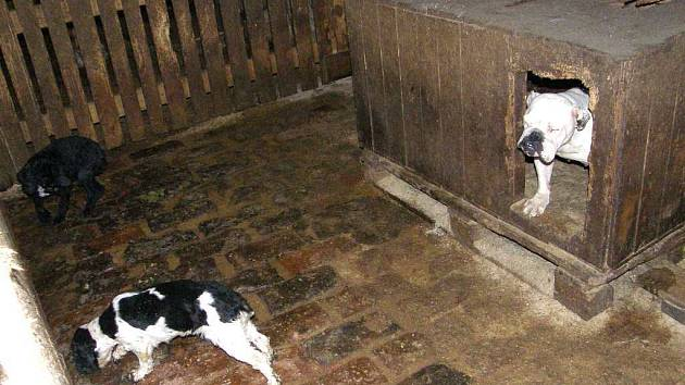 Pohled do chovatelského zařízení v Jarošově nad Nežárkou, kde strádalo  kolem stovky psů.