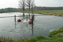Biologický rybník slouží jako šetrná čistička odpodaních vod. Rybník v Jílovicích.