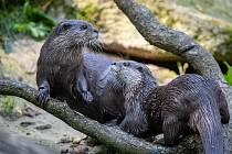 Novými přírůstky se může pochlubit Zoo Na Hrádečku, která se nachází mezi obcemi Horní a Dolní Pěna na Jindřichohradecku.