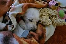 Žena z Dačic musela po vycházce se psem na místní veterinu.