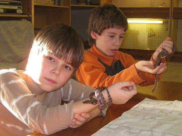 Členové kroužku Plazíci v jindřichohradeckém domě dětí.