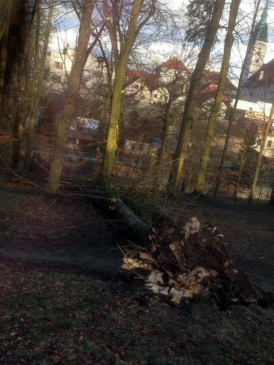V důsledku silného větru spadl strom i v jindřichohradeckém parku.