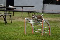 Parkur, skok vysoký, skok daleký a rovinná dráha. To jsou čtyři disciplíny, které čekají králičí závodníky.