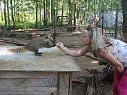 Nosál červený patří k oblíbeným zvířatům v rodinném Zooparku Na Hrádečku v Horní Pěně. Nad jeho dalším chovem visí nyní otazník. Na snímku je čtyřměsíční mládě s Romanou Albrecht Liškovou.
