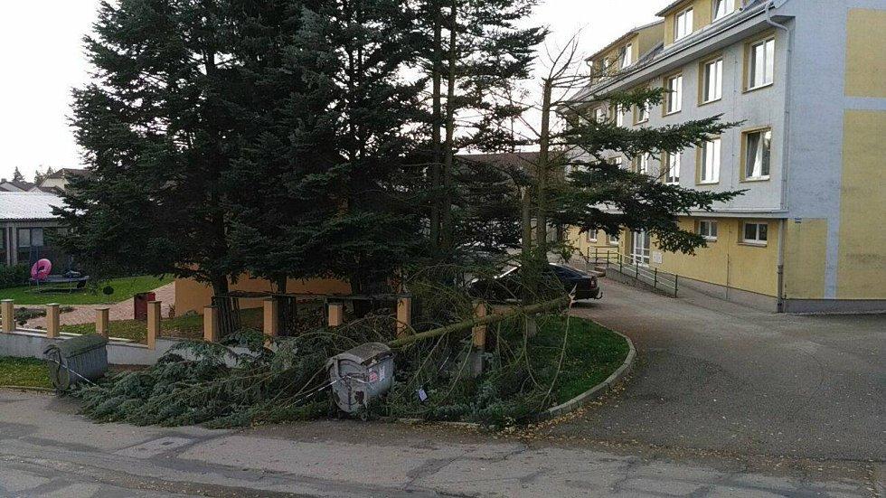Další z mnoha popadaných stromů se nachází uprostřed zástavby na hradeckém Jakubu.