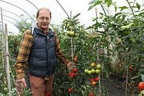 Petr Mastný z Doňova na Jindřichohradecku koncem srpna sklízí na farmě například rajčata, papriky, lilek, kapustu, brokolici a další zeleninu.