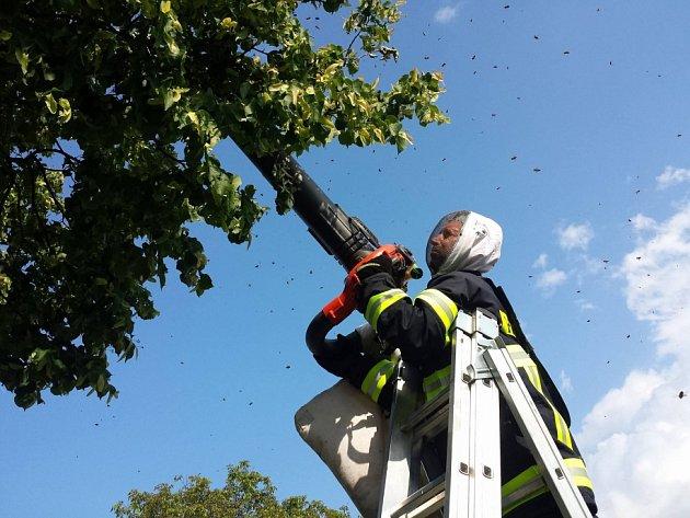 BODAVÝ HMYZ. Dobrovolní hasiči z Jindřichova Hradce mají vybavení pro likvidaci nebezpečného hmyzu. Na včelí roje používají speciální vysavače. Snímek je ze zásahu v Kačlehách.