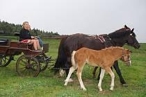 Ustájení či výuku jízdy na koních pod odborným dohledem cvičitele nabízí i rodinná stáj v Horních Dvorcích nedaleko Strmilova. Na snímku je spolumajitelka stáje  Michaela Dubová.