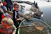 Rybáři sklízí úrodu kaprů rybníka Rožmberk.