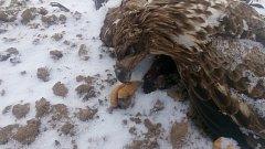 Smutný pohled na dílo neznámého traviče zvířat u Matné. Foto: Policie ČR