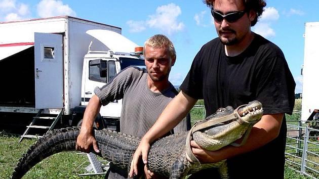 Ojedinělou show s živými krokodýly předvedou bratři Berouskové z cirkusu Sultán. Cirkusové šapitó bude stát od středy 8. září až do neděle 12. září na vojenském cvičišti.