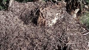 Mravenci už se dali do díla a psi neodolali koupeli. Přírodní památka Matenský rybník u Jindřichova Hradce.