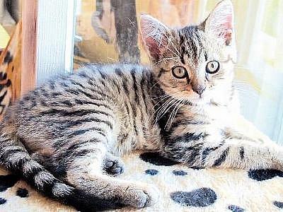 Také v zařízení Kočičí Azyl čekají na nový domov kočky a koťata různého stáří.