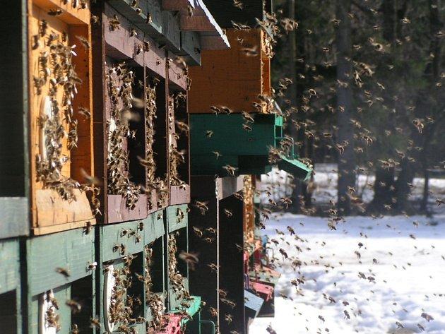 Medu bylo v posledních letech málo. I letos to možná  s cenou a množstvím této sladké pochoutky nebude žádná sláva, i když je ještě podle včelařů předčasné dělat jakékoli závěry.