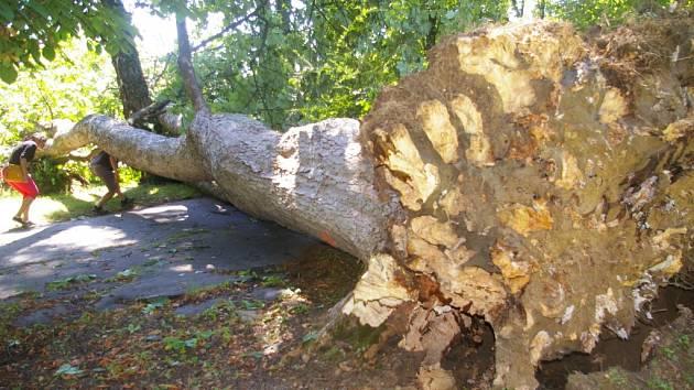 Špička stromu v pelhřimovských Sadech dopadla až na druhý břeh Bělé, kde poškodila plot kurtů.