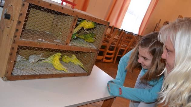 Ptačí švitoření se v sobotu rozléhalo sálem kulturního domu v Komorovicích.