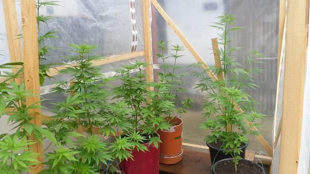 Mladíkovi zabavili 12 rostlin.