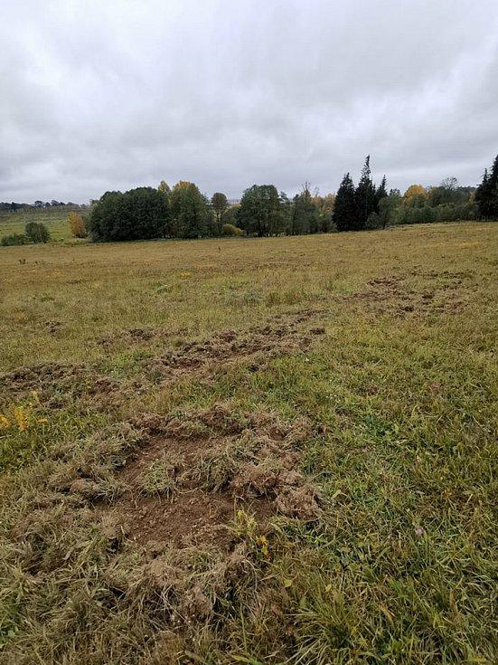 Louky na Pelhřimovsku teď ničí prasata ve velkém.