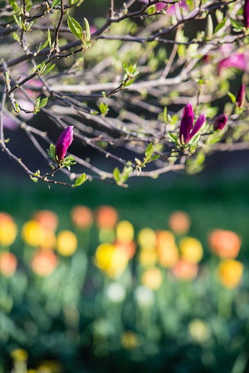 Květiny na Vysočině.