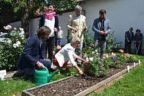 Od středečního odpoledne roste v rozáriu u rodného domu Gustava Mahlera v Kališti u Humpolce další růže.