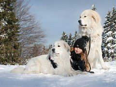 Pyrenejský horský pes.
