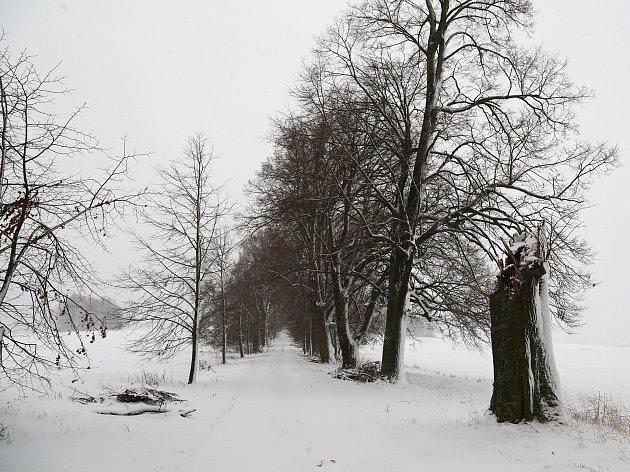 V památné lipové aleji Dráchov – Heřmaň jsou revitalizační práce, které byly naplánované na letošní rok, hotové.