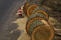 Na řezu je patrný špatný stav stromů.