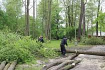 V pelhřimovských Městských sadech včera začali s kácením nemocných stromů. Dělníci budou pokračovat až do pátku.