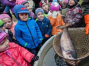 Do pacovské rybárny mířily davy lidí. Největší zájem byl o kapra