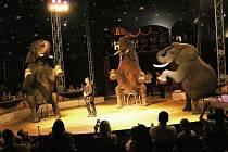 Diváci uvidí drezúru tří afrických slonů. Vystoupení nese název Show, která vyrazí dech.