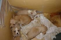 Z kontejneru na pelhřimovském sídlišti putovali psi do útulku v Polné u Jihlavy. Tam našla štěňata nové páníčky.