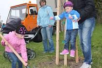 Minulý rok se v rámci projektu vysázelo 55 stromků v ulici k Silu, kde je průmyslová zóna.