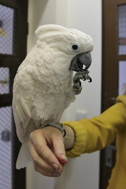 Ostatní papoušci z Děkanské zahrady.