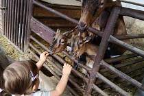 Agroturistika na Vysočině láká hlavně děti.