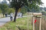 Již zasazené stromky podél silnice z Pelhřimova směrem na Řemenov si tentokrát přišli rodiče pouze vybrat. Foto: Petr Přibyl