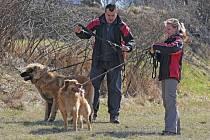 Společné venčení, takzvanou free sobotu, pořádal známý psí psycholog Rudolf Desenský.