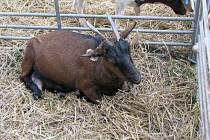 Výstava drobného zvířectva, ovcí, koz, koček a hadů v Pelhřimově