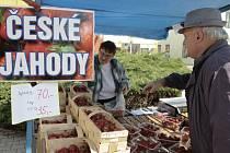Na sedmdesát korun za kilogram klesly ceny jahod, které už třetí týden nabízejí stánkaři v centru Pelhřimova.