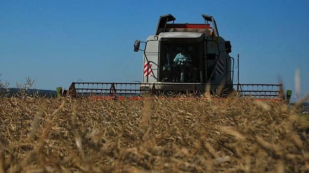 Většina polí na Pelhřimovsku se proměnila ve strniště. Zemědělci odhadují, že žně potrvají jen několik málo dní. Vše teď závisí hlavně na počasí. Kvalita některých obilovin ale nesplňuje potravinářské normy.