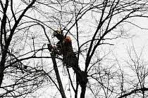 O desítky stromů, které rostou v Městských sadech v Pelhřimově, se v těchto dnech starají arboristé.