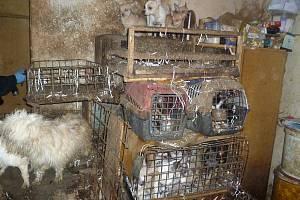 Týraní psi.