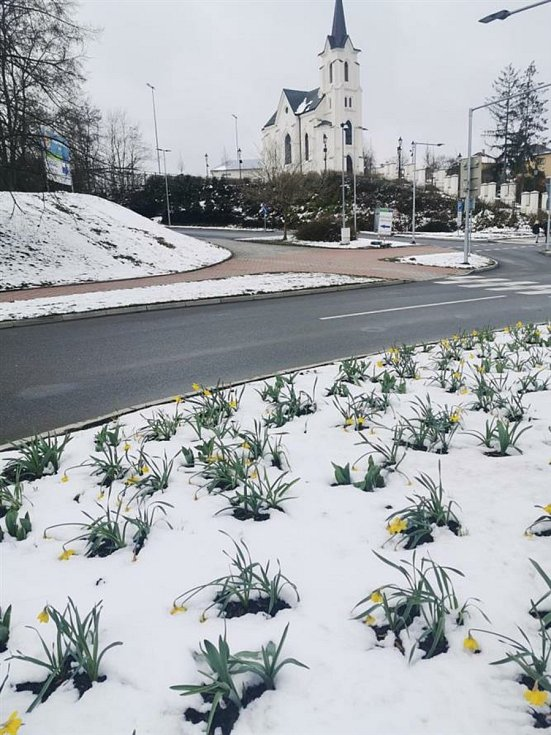 Navzdory nepříznivému počasí začínají Pelhřimov zdobit tisíce květin.