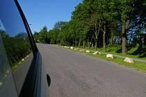 Návštěvníci zatopeného lomu v Horní Cerekvi, kteří si zvykli chodit a hlavně parkovat ze strany od nádraží, mají toto léto smůlu.