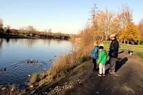 U řeky je dobře. Atrakcí jsou labutě i kachnyAť už se lidé vydávají na zdravotní vycházky, procházky s kočárkem či se psem, malé rodinné výlety a podobně, hodně jich přitom zamíří k řece, kde mohou pozorovat a také krmit kachny, lysky, labutě. V Žatci obl